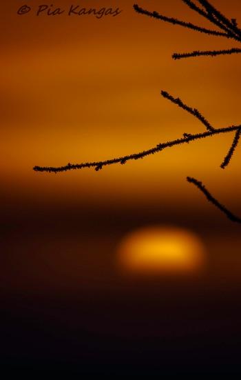 Aurinkoinen / Sunny